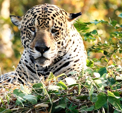 Group Jaguar Tours