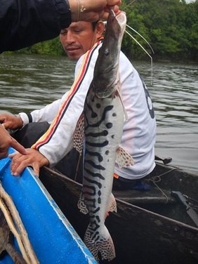 amazon fishing in peru
